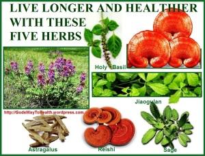 herbs CLWS
