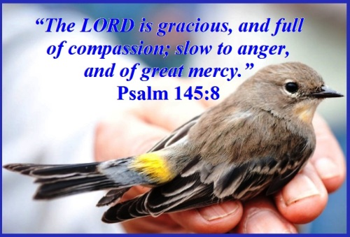 Psalm 145 vs 8 E