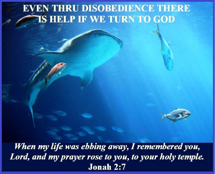 Jonah 2 vs 7